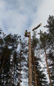 Спиливание, валка и удаление деревьев в Улан-Удэ