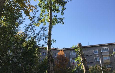 Спил деревьев Улан-Удэ