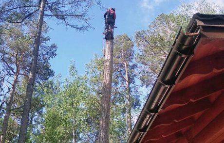 Удалить дерево Улан-Удэ