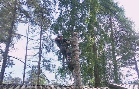 Спилить дерево Улан-Удэ